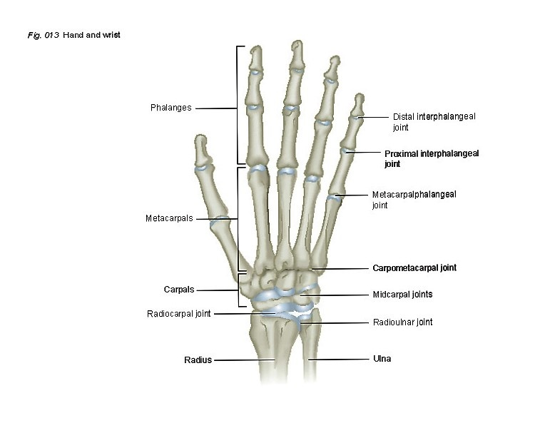 Hand Wrist Patient Education