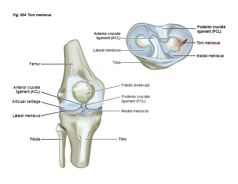 Stem Cell Therapies for Knee Cartilage Repair